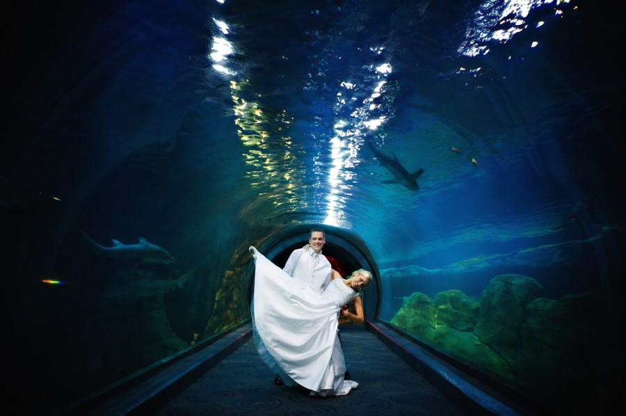 weddings mainline