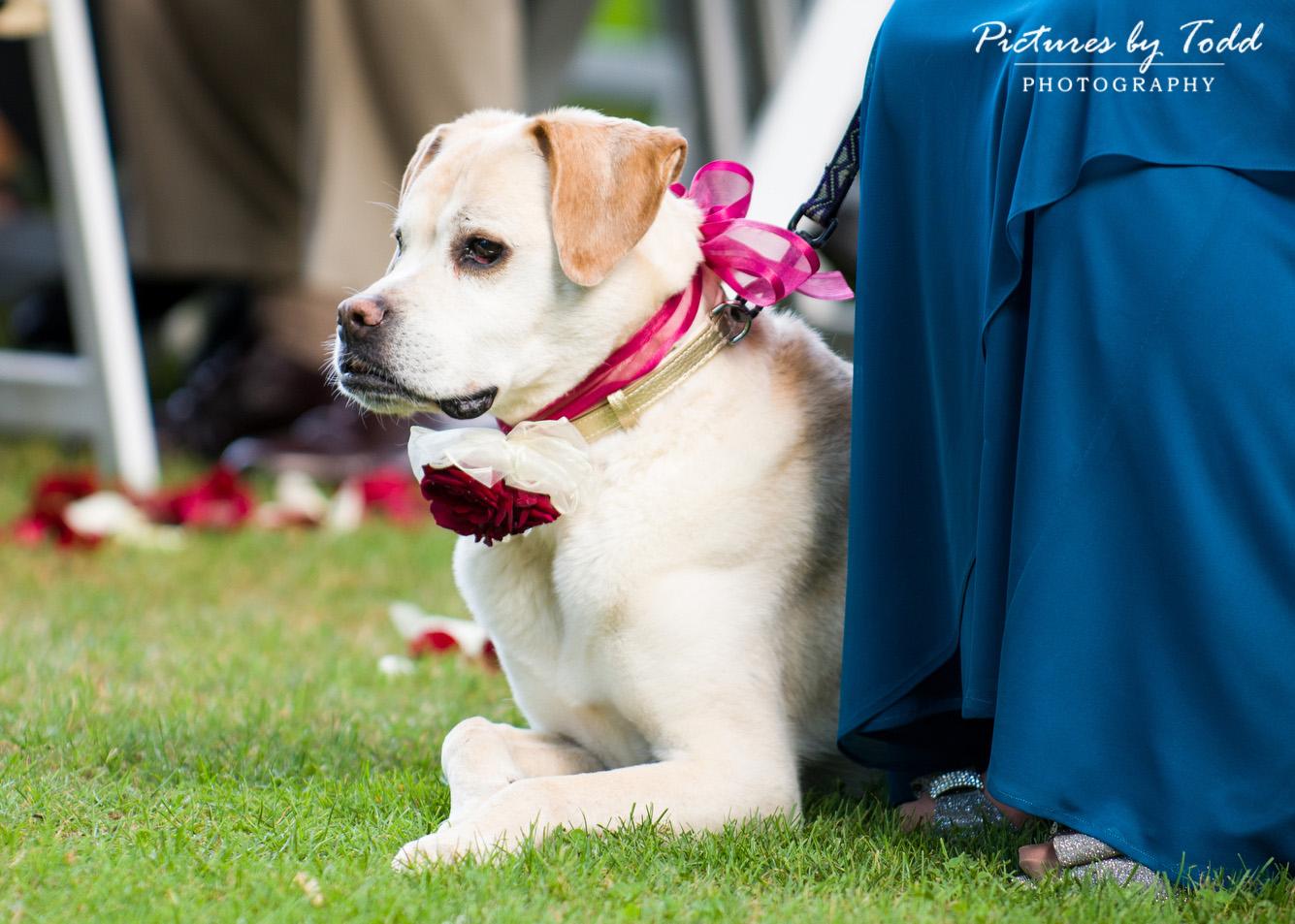 Dogs Wedding Ceremony Ideas