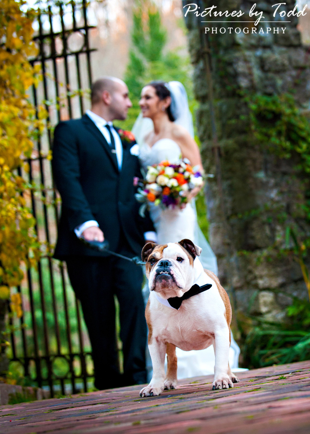 Including your dog in your Wedding | Wedding Ideas