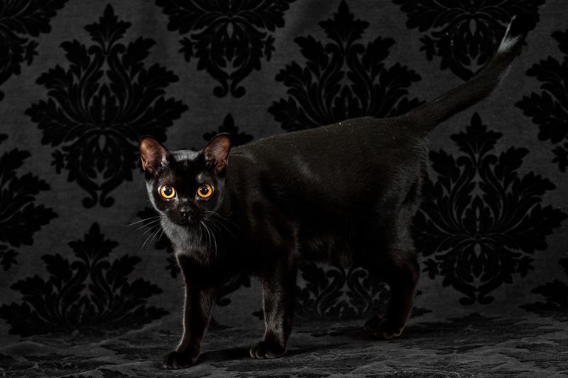 Cat-Pet-Portrait-Photographer-Philadelphia