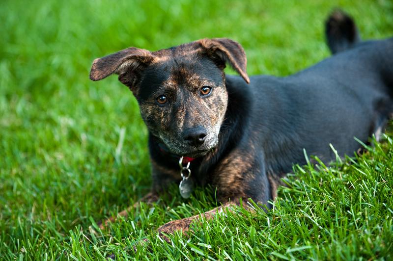 Dog-Pet-Portrait-Photographer-Main-Line