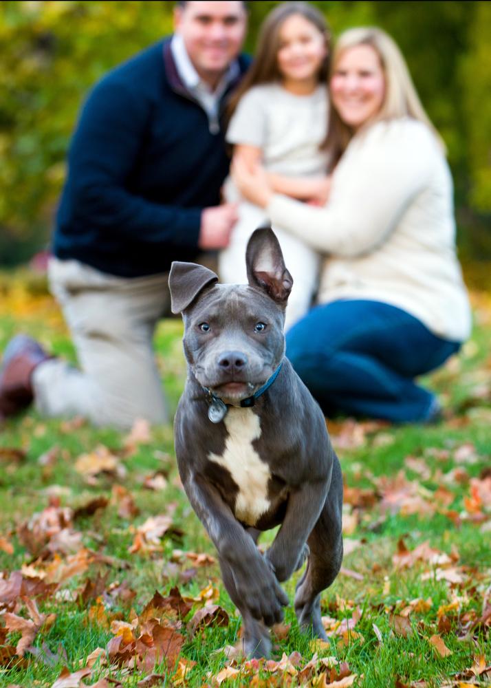 Family-Pet-Portraits-Photographer