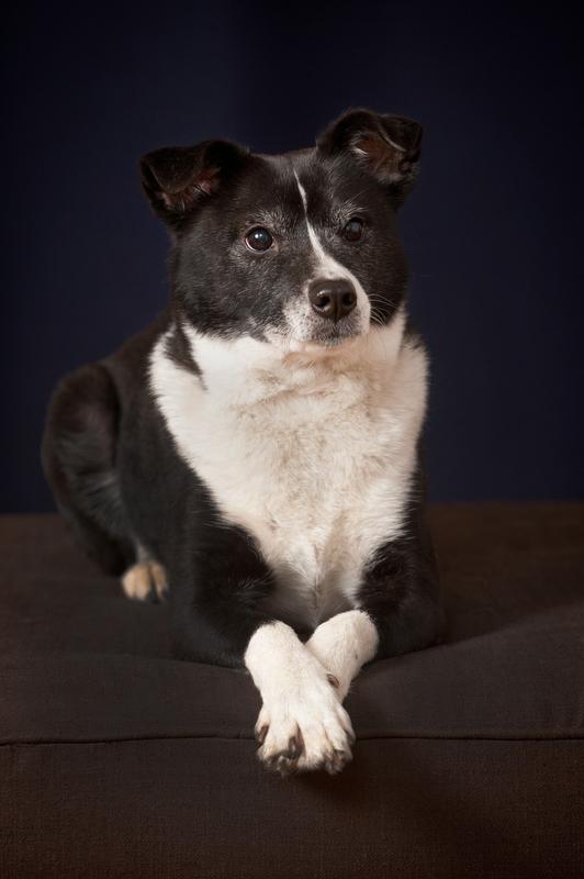 Main-Line-Cute-Dog-Pet-Portrait-Photographer