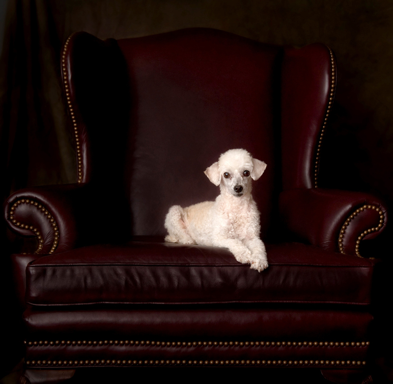 Main-Line-Pet-Portrait-Photographer